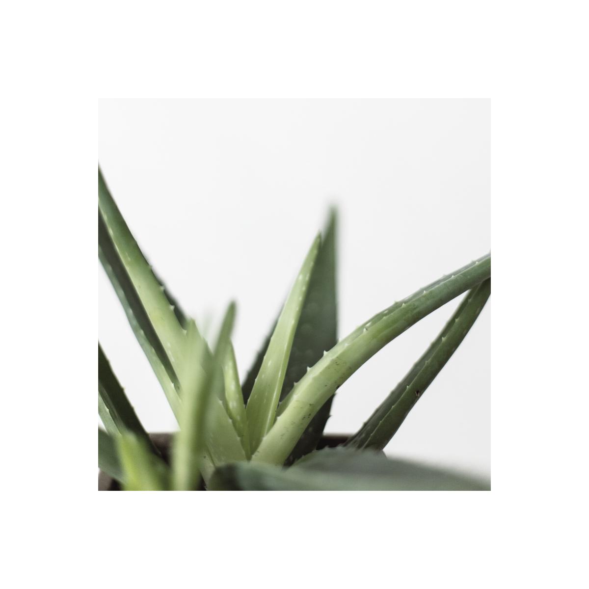 Fragrance Aloe (Grasse) Sans allergène