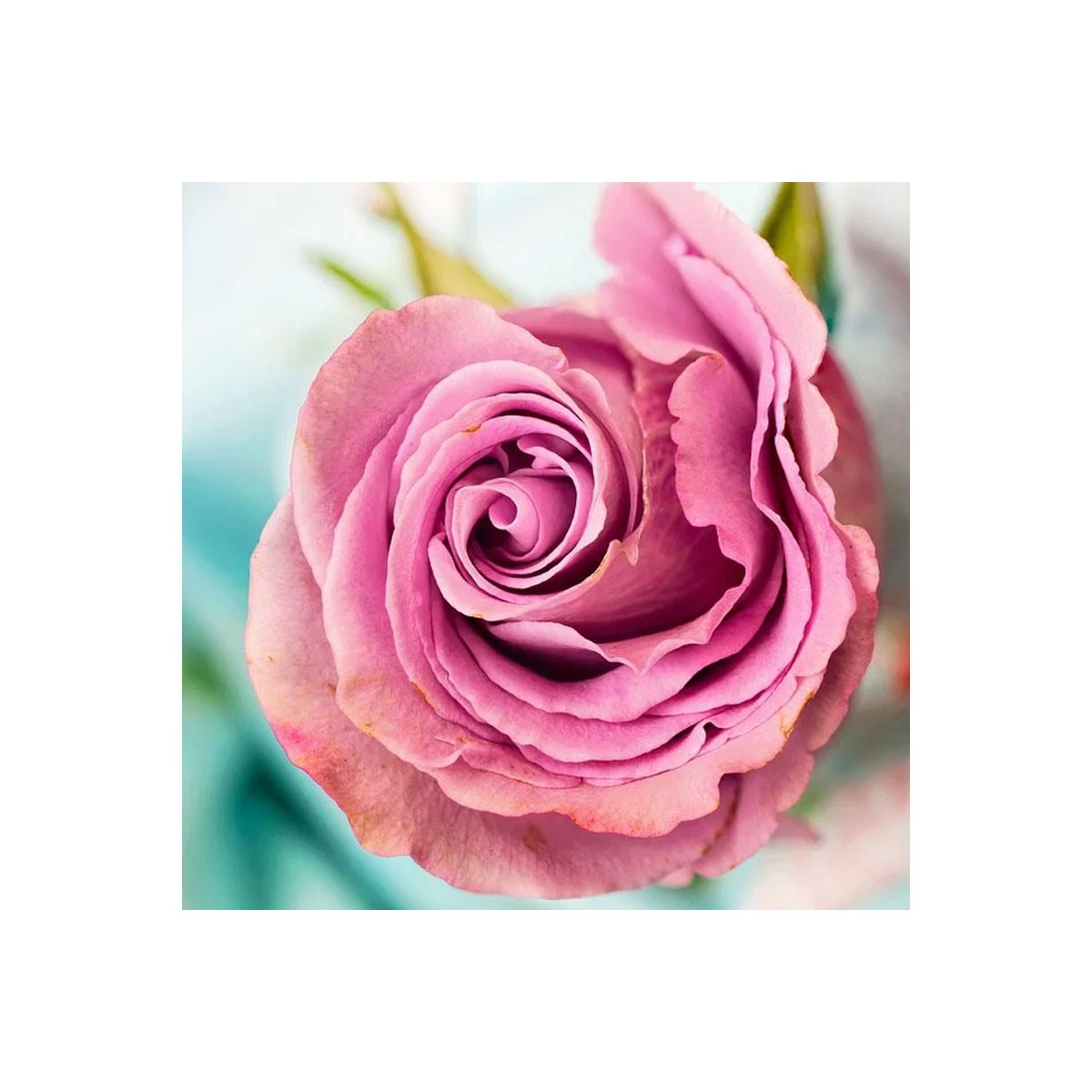 Fragrance Rose Orientale