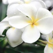 Fragrance Monoï (Grasse)