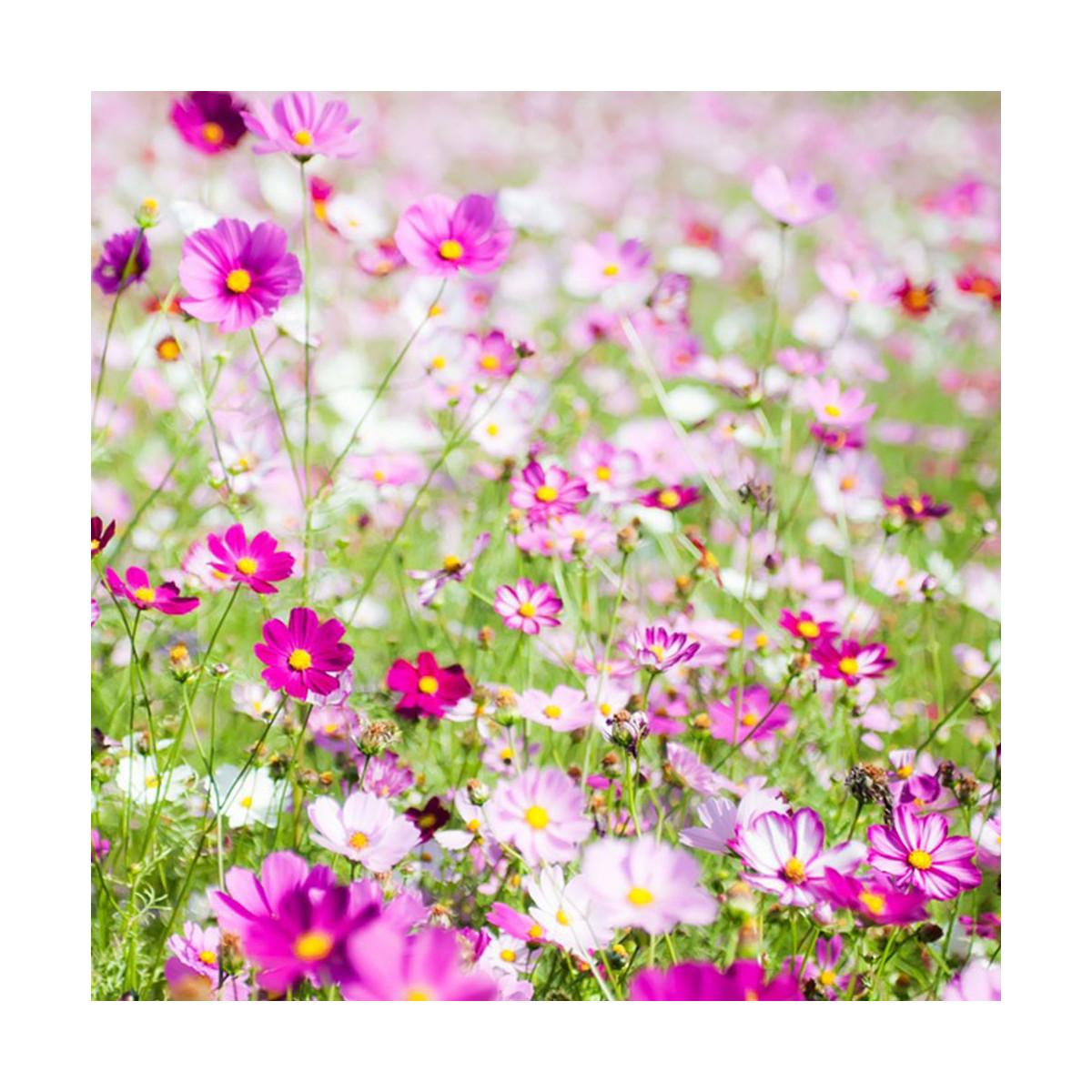 Fragrance Fleur des champs (Grasse) Sans allergène