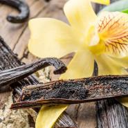 Fragrance Vanille des îles (Grasse)