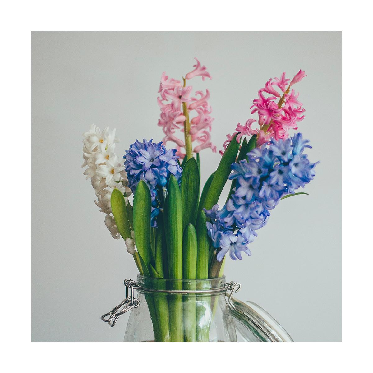 Fragrance Jacinthe